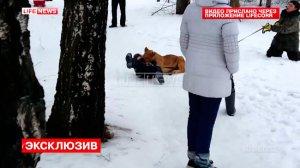 Во Владимире львёнок напал на ребёнка. ВИДЕО